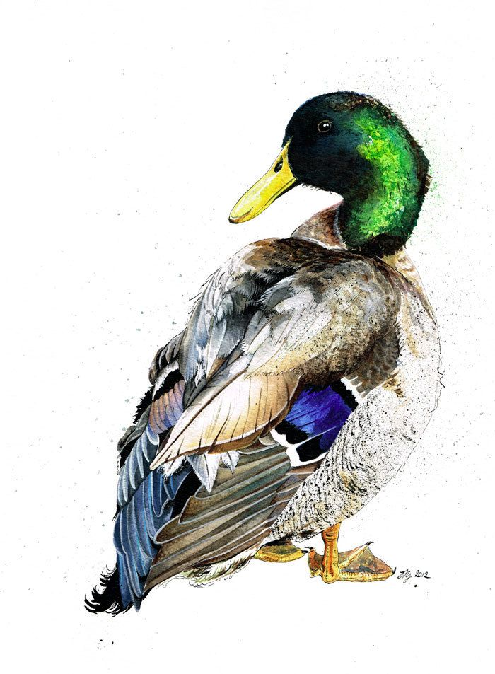 Original A3 Mallard Duck Bramble Mixed Media Painting by jina11