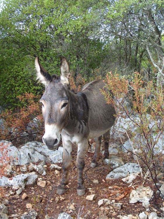 Visiter le nord de la Sardaigne - Carnet de voyage by Sylvia                                                                                                                                                                                 Plus
