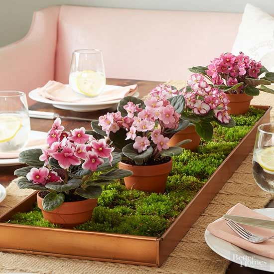 This simple tabletop centerpiece consists of four potted African violets, moss, and a 1-inch-deep tray. This arrangement features violets in the same color palette—from front to back, 'MyTemptation', 'Virginia', 'Harlequin', and 'Indiana'—but varies the subtle details of their blossoms./