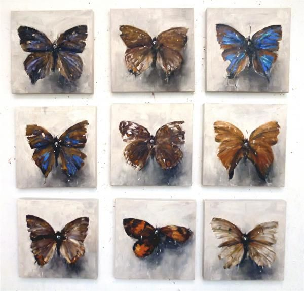 Stephen Allwood childhood collection butterflies and moths