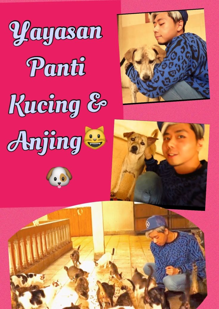 Roy Kiyoshi Vlog di Yayasan Panti Kucing & Anjing ❤️ - YouTube