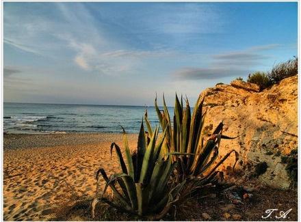 Natural Reserve, Dunes de Son Real, Can Picafort, Mallorca
