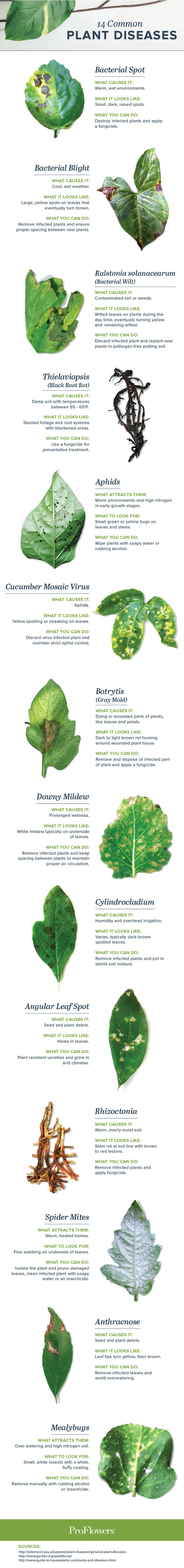 Is your plant looking a little yellow, brown or wilted? It could be a sign of plant disease. Use this guide to identify & treat common plant diseases.
