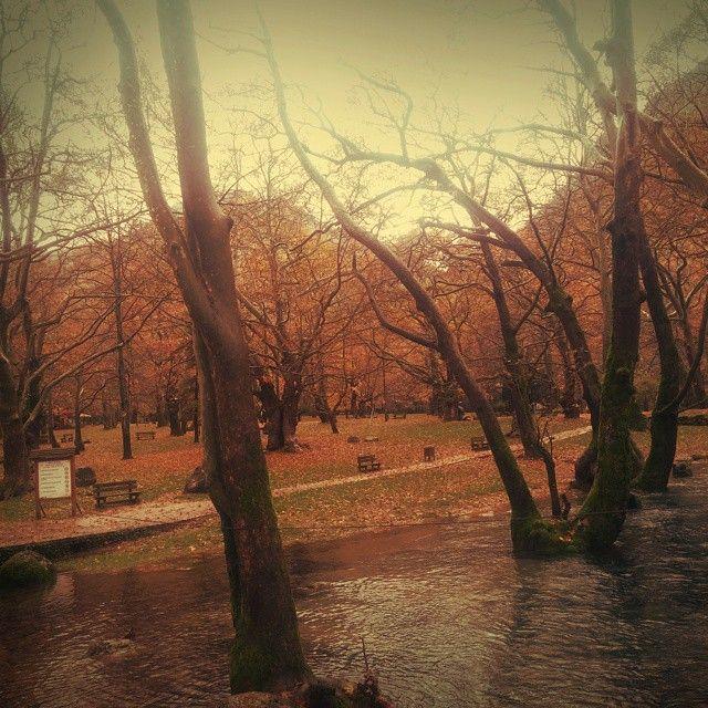 #nature#river
