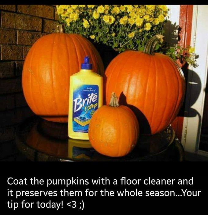 Preserving your Pumpkins Tip...these are the BEST Fall Craft Ideas & DIY Home Decor Projects!