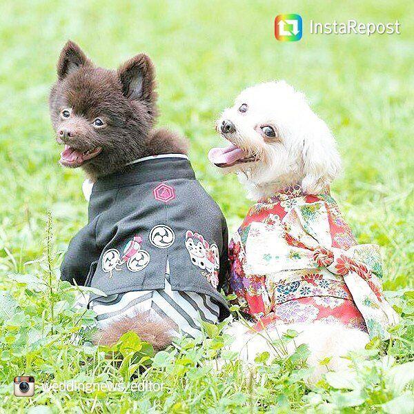 大切な#結婚式 は大好きな#ペット と一緒に⛪💕#挙式 で一緒に入場したり、#リングドッグ として指輪を届けてもらうと温かい雰囲気に♥#衣装 も#ドレス だけじゃなく#和装 もあるそうですよ✨#レクトウェディング ではペットと結婚式ができる会場もご紹介しています#🐶#🐾#広島花嫁#日本中のプレ花嫁さんと繋がりたい#lect#犬#dogstagram#instawedding#犬バカ部#愛犬#結婚#ブライダル