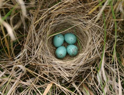I want a bird's nest like this in the tree in my yard.