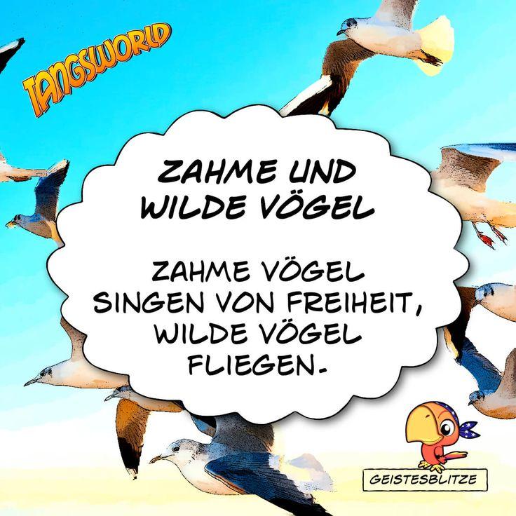 Zahme Vögel singen von Freiheit - wilde Vögel fliegen.
