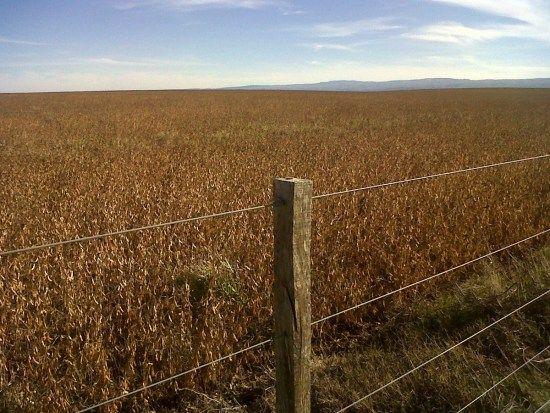 Excelente campo agrícola a 50 km de Río Cuarto en Campos en Alquiler y Venta Río Cuarto