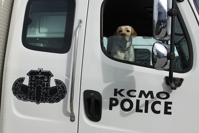 canines in criminal justice Career as a police dog trainer: job options and requirements  those interested in police administration courses might consider enrolling in a criminal justice degree program with an.