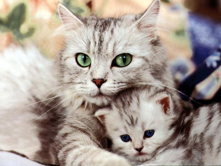 cute mother and daughter cats