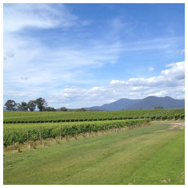 Yarra Valley - wine region. Victoria Australia