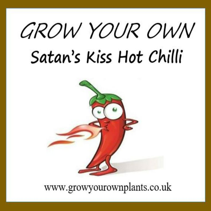 Each plant kit contains all you need to grow your own Satan's Kiss Hot Chilli plant kit from seed