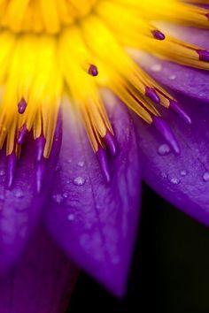 Je ziet hier een complementair contrast want paars en geel versterken elkaar.