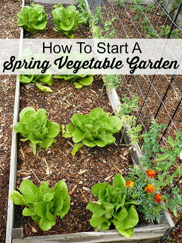 how to start a spring vegetable garden - Vegetable Garden Ideas For Spring