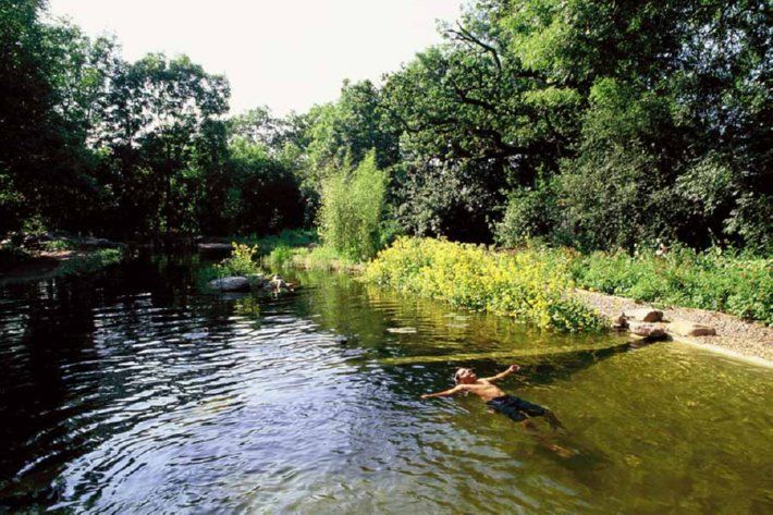 Natural Pools or Natural Swimming Ponds (NSPs)    Chemical-free water garden and swimming pool. The plant portion, or regeneration zone, is separated from the swimming area by the wall seen a few inches below the water's surface.