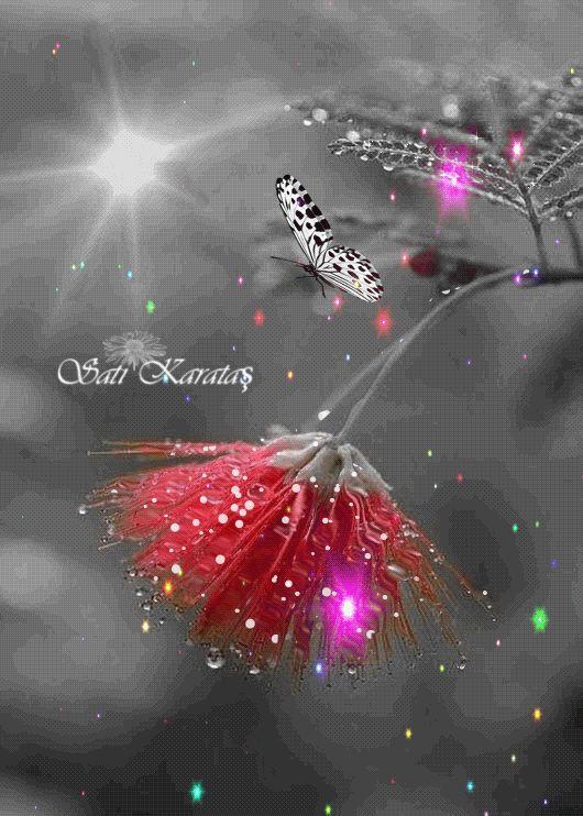 Animasyonlu Fotoğraf