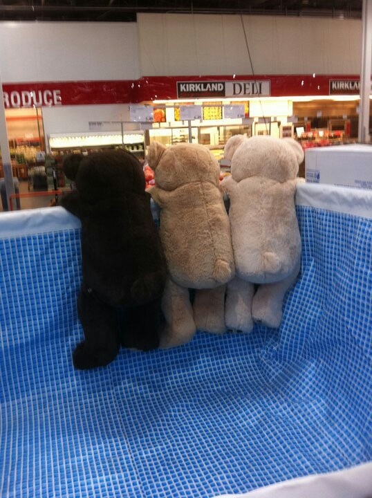 15 Best Images About Costco Bear On Pinterest To Be Tax
