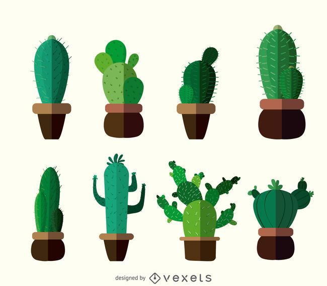 Cactus Illustrations Featuring Multiple Types Of Cacti In