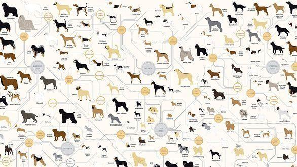 blank dog pedigree chart