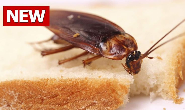 What Is Natural That Can Get Rid Of Roaches Fast