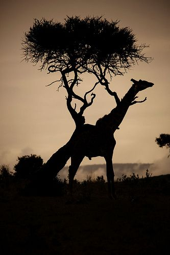 Masai Mara, Kenya - BelAfrique your personal travel planner - www.BelAfrique.com