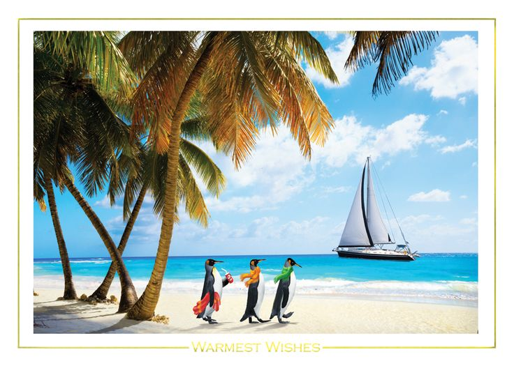 Island tropical beach christmas card with sailboat palm trees and penguins https