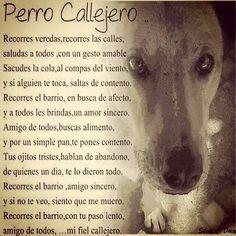 #AdoptaNoCompres #noalmaltratoanimal #perros