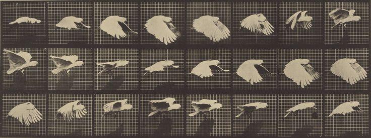 Animal Locomotion; Eadweard J. Muybridge (American, born England, 1830 - 1904); 1887; Collotype; 16.5 x 43.8 cm (6 1/2 x 17 1/4 in.); 84.XM.628.4; J. Paul Getty Museum, Los Angeles, California