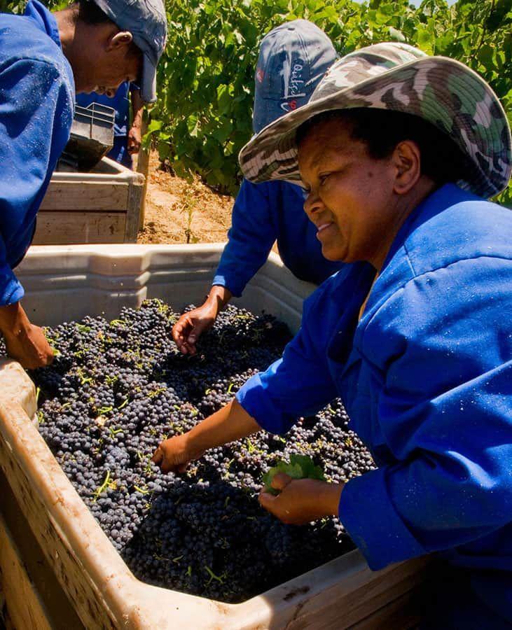 Fantastiskt vin på vingården Meerlust i Kapstaden.