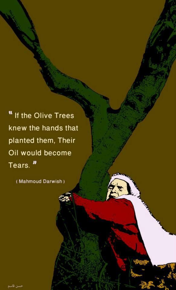 """ If the olive trees knew the hands that planted them, their oil would become tears' Beautiful falesteen. Free Palestine."