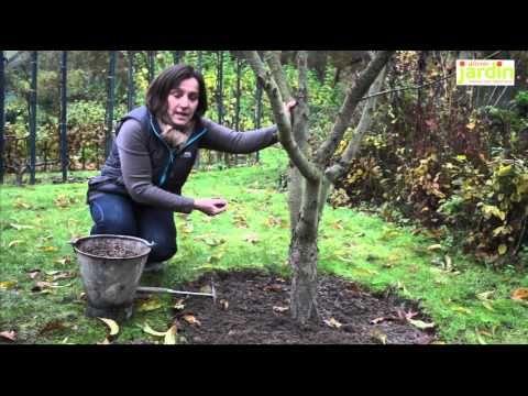 Fertiliser les arbres fruitiers - YouTube