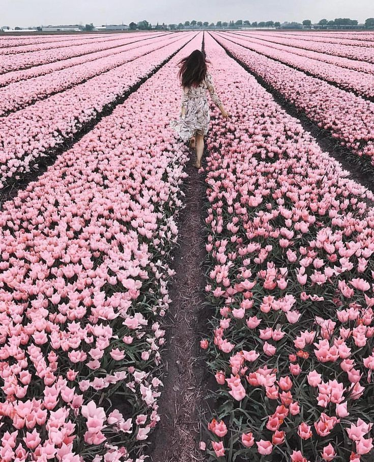 Lisse, Pays-Bas, Netherlands #tulips #flowers #netherlands – Local Adventurer – Collecting Experiences in NYC + Worldwide