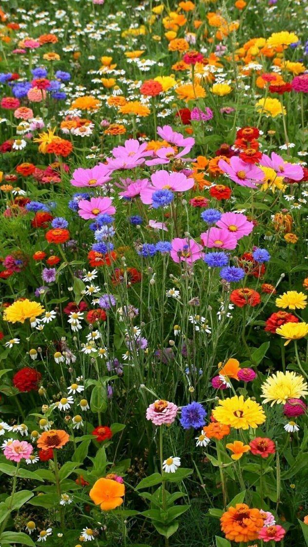 wildflower garden 30 - Wildflower Garden