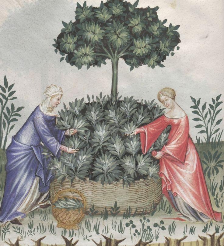 Two women picking from a sagebrush - Salvia | Österreichische Nationalbibliothek - Austrian National Library | Public Domain