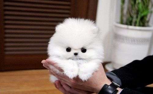 Why is it that EVERYTHING single time I come across a cute white dog like this one it ALWAYS says White small dog  / fluffy dog / white furry puppy. FOR CRYING OUT LOUD WHAT ARE THEY CALLED?????