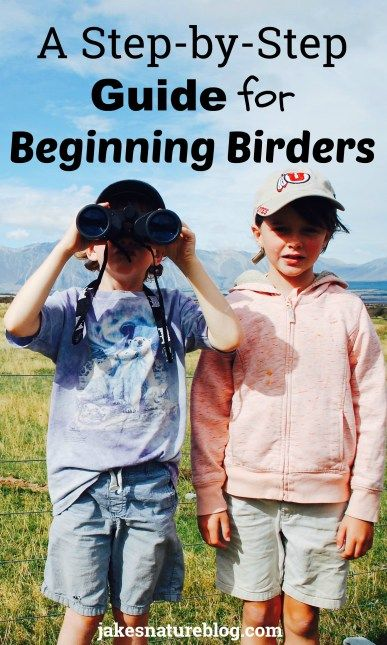 A step-by-step guide for beginning birders.  Great tips to learn about birds.