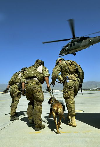 Pararescueman train with Army, military canines U.S. Army tactical explosive detection dogs and their handlers take turns getting hoisted into a HH-60G Pave Hawk by 83rd Expeditionary Rescue Squadron pararescuemen during joint training June 21, 2013, at Bagram Airfield, Afghanistan. The TED dogs are trained to find explosives outside the base. The chances of them needing rescue during operations are high, making this training important for both branches, according to the dog handlers. (U.S…