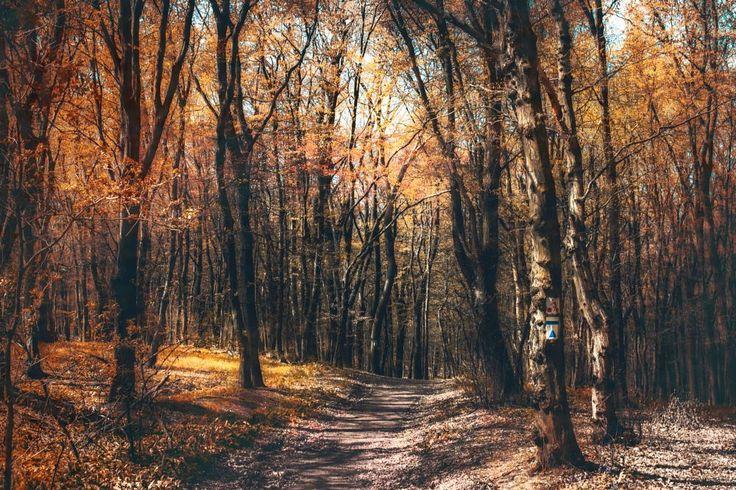 hiking by Nikoletta Kolozs