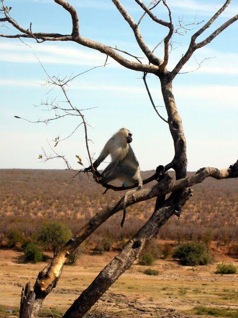 NINIVEMAIL: Nekonečný Příběh Zvířat v Jižní Africe Fotografův ...