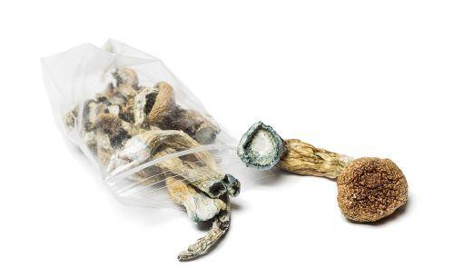 Des champignons hallucinogènes pour combattre la dépression ? #fle #fslchat