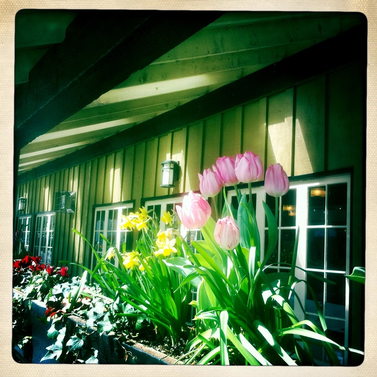 Spring flowers in Fort Langley....