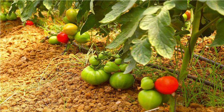 Antalya Tarım Firmaları