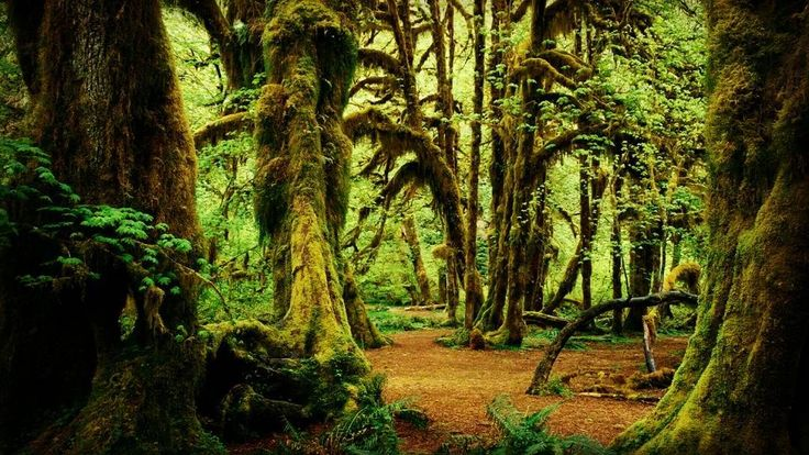 Beautiful #forest