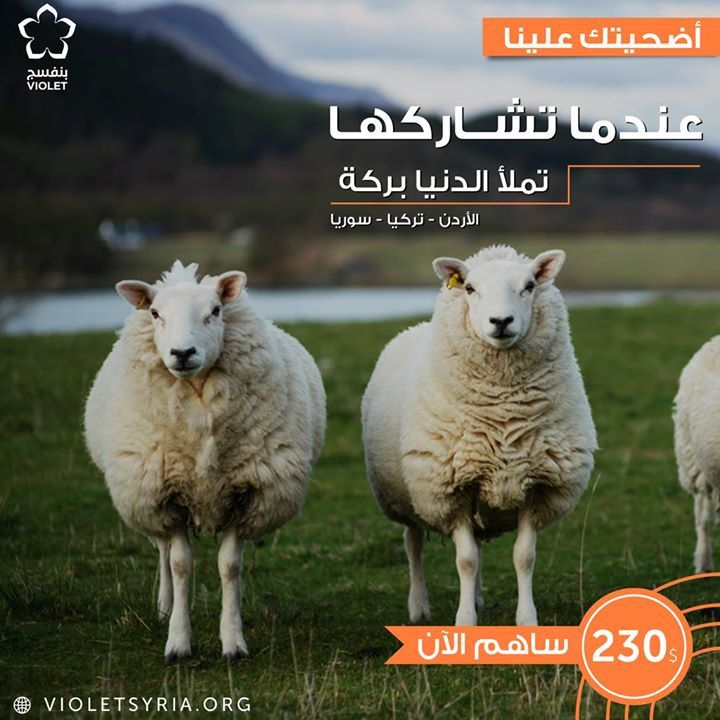 الأضحية من أعظم ما يتقرب به العبد إلى ربه يوم العيد سيتم توزيعها في الأردن و سوريا وتركيا Violetsyria Org Project 4566 بنفسج Violet Animals Goats