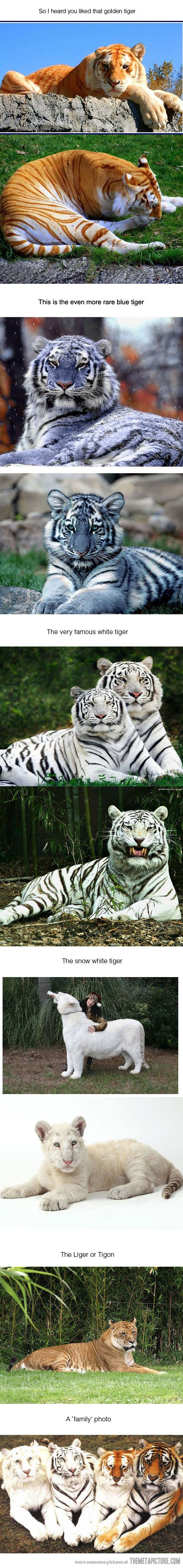 Tigers are my most favorite animals. I'm not sure about the blue tigers but all the rest are beautiful!