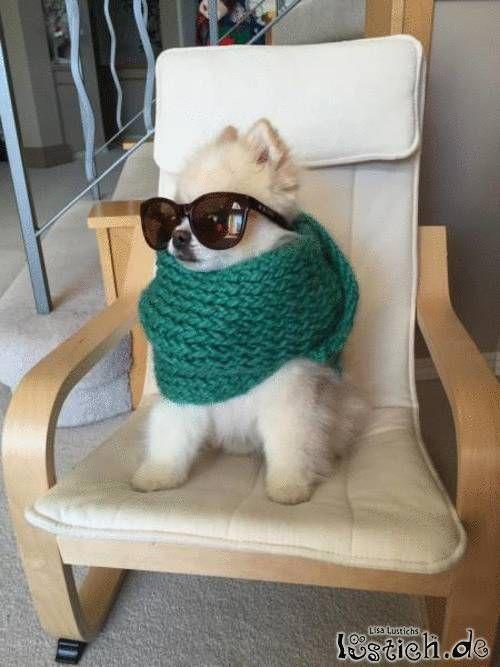 Echt cooler Hund