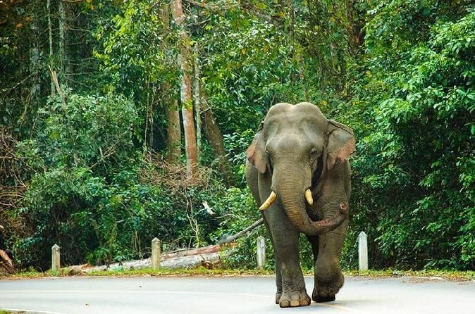 Khao Yai National Park, Thailand - Lonely Planet