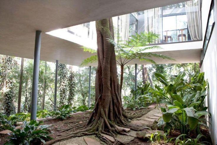 Der Baum hat Zuhause