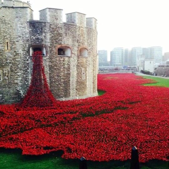 Tower of London Poppy's